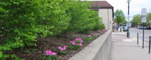 Flowers at the Northfield Public Library