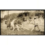 Farmer Driving a Plow Pulled by Oxen, c. 1890