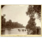 Five Cows in the Cannon River below Waterford, 1893